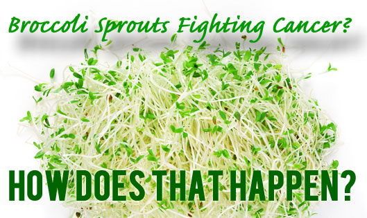 Broccoli Sprouts Fighting Caner? How Does that Happen?