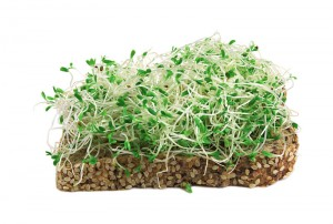 sprouts on bread
