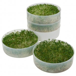 Victorio Seed Sprouter Stackable Trays