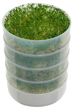 4 Victorio Stackable Trays for Growing Sprouts